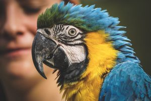 review papegaaienschool online