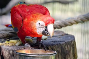 papegaai huisdier