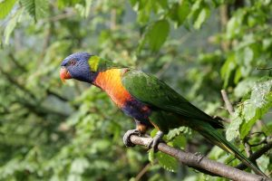 papegaai zitstok