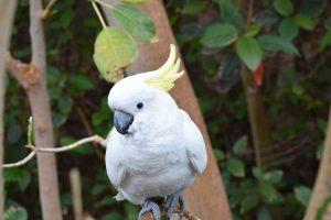 papegaai wit