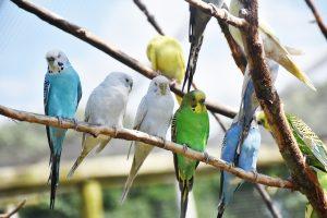 papegaai opvoeden