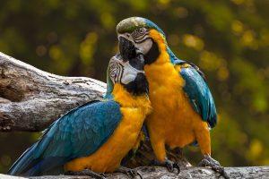 papegaaien cursus